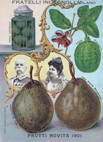 1901 - novità frutti
