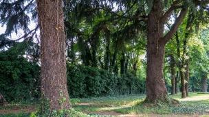 Il filare di pini e il muro che delimita la proprietà pubblica? da quella privata.